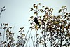 Back Yard_2018_04_07_(14) (Juergen__S) Tags: yard backyard nature flower closeup belgium mons tree bird