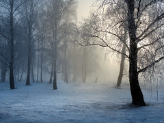 The sun rises through the winter fog (arthurverigin) Tags: mist morning siberia sunrise snow forest frost fog birch russia ubravnets