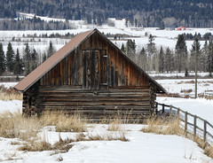 "A rural ""winter"" scene (annkelliott) Tags: alberta canada swofcalgary scenery landscape hill foothills acreage farm building structure architecture old barn wooden weathered fence grass rural ruralscene likewinter snow tree trees forest field outdoor spring 20april2018 nikon b700 nikoncoolpixb700 annkelliott anneelliott ©anneelliott2018 ©allrightsreserved"