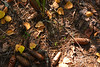 DSC_9809 (sevbette) Tags: лес осень