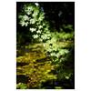 River Tiffey, Carleton Forehoe (Silas Slack) Tags: river tiffey carleton forehow colour leaves nature trees norfolk diagonal green leica m10 summilux 50mm leicasummilux50mmf14asph