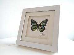 Some quick watercolor & ink butterflies (GP1805) Tags: draw drawing drawings art artwork artist sketch watercolour watercolor ink inkdrawing butterflies butterfly derwent winsorandnewton fabercastell