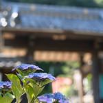 20180616 Inuyama 1 thumbnail