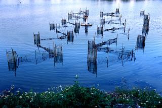 Shrimp cage è¦ç±