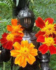 Flower Power Black Knight (atjoe1972) Tags: marx toys black knight actionfigure vintage retro 1960s 1970s sixties seventies nobleknights marigold flower child power hippie sircedric madness silver gold blue atjoe1972