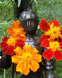 Flower Power Black Knight