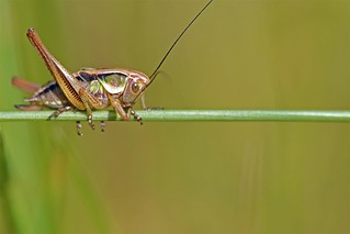 365 - Image 166 - Cricket... **Explored**