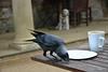 Delicious! (Caulker) Tags: bird cafe dog table chips mug