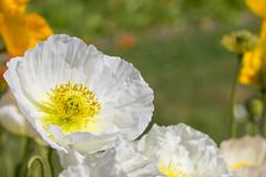 Un coeur d'or (StephanExposE) Tags: paris iledefrance france stephanexpose nature fleur flower parc park jardin jardindesplantes canon 600d 100mm 100mmf28lmacroisusm