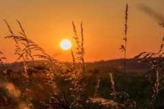 Couché de soleil proche de Samer