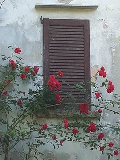 The roses and the window