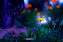 Pequeños momentos... (josechino2424) Tags: flor primavera josechino2424 humanesdemadrid