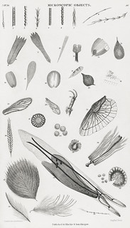 Microscopic Objects from A history of the earth and animated nature (1820) by Oliver Goldsmith (1730-1774). Digitally enhanced from our own original edition.