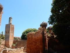 Chellah Minaret and laclacs (Mulligan Stu) Tags: minaret cignone laclac stork berber phoenician almohad morocco phoenicianruins rabat romanruins roman marinid chellah maroc