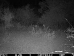 2018-06-24 05:13:42 - Crystal Creek 1 (Crystal Creek Bowhunting) Tags: crystal creek bowhunting trail cam