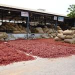Chilifabrik in Guntur, Indien