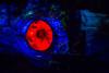 All Seeing Eye (Jared Beaney) Tags: canon6d canon asia japan tokyo tokyodisneyresort disney themeparks themepark amusementpark photography photographer travel disneyparks disneyresort tokyodisneyseas tokyodisneysea darkride 20000leaguesunderthesea mysteriousisland