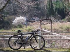 (jun.skywalker (enishi hand made cyclecap)) Tags: cherryblossom cherryblossoms sakura 桜 櫻 kyoto japan 魚ヶ淵 bike bicycle roadbike enishi 白梅 梅