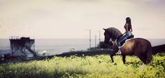 Here I am (VeraCruza) Tags: orust secondlife landscape horse sea ocean nature virtualworld oboeru urworld