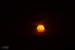 Luna (saqramone) Tags: canon canoneos canoneos500d canoneosrebelt1i canonrebelt1i canont1i rebelt1i moon