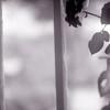 """Regina"" (Foto 1 di 3) (Maria Evgenidu) Tags: yashicamat124 yashica ilfordfilms ilford ilfordhp5400 expired film expiredfilm pellicola pellicolascaduta squareformat mediumformat 6x6 120 analogue analog analogico analogica analogphotography analogpassion aboutme thefilmexperience theanalogproject thefilmcommunity truegrain tlr fotografiaanalogica filmisnotdead finchècèpellicolacèsperanza filmisawasteoftime filmroll staybrokeshootfilm iamastoryteller iscanbymyself beanalogic bw bn biancoenero blackandwhite classicblackwhite riccione snow snowinriccione neveariccione marzo2018"