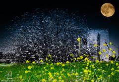 the moon , the tree and the ruin (spiderciccio78) Tags: puglia francavilla fontana francavillafontana luna salento nikon d7000 d7000nikon nikonitalia nikontop photo photography fotografoitaliano bnw bnwcity instapic instapuglia igersitalia pic picoftheday picofday domiadphotonetwork moon discoveredpuglia photodiaryit scattiamoitalia igerspuglia igersfrancavillafontana