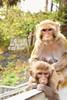 Hong Kong (TravellerKey) Tags: animals traveller travelgram travelblogger travelblog travel travelling travelbug travelaroundtheworld hongkong monkey