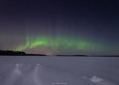 Sky on Fire. (laurilehtophotography) Tags: suomi finland jyväskylä ruokosaari nikon d610 sigma 20mm art auroras auroraborealis northernlights nature landscape sky stars winter lake