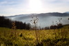 Landscape (Strocchi) Tags: landscape trekking sky cielo grass erba fog nebbia canon eos6d 24105mm sun sole