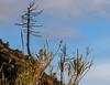 Entre voisins... (between neighbours) (Larch) Tags: sky tree nuage cloud roseau reed bonassola levanto ligurie italie nature pente slope italy italia amitié convivialité warmth friendliness voisin neighbour neighbor neighborhood neighbourhood rire blague joke