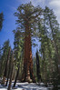 Giant Forest, Sequoia National Park (benereshefsky) Tags: sequoia sequoianationalpark nationalpark nationalparks trees mountains forest california travel travelphotography travelphotographer nature naturalbeauty photography