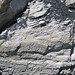 Sandstone (Middle Pennsylvanian; Frazeysburg Pit, Muskingum County, Ohio, USA) 14