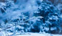 Winter Feels (benjamin.t.kemp) Tags: blue color colorsinourworld winter cold calm atmospheric branch ice snow macro