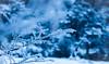 Winter Feels (benjamin.t.kemp) Tags: blue color colorsinourworld winter cold calm atmospheric branch ice snow macro
