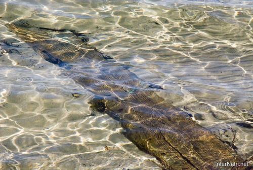 Шацький Національний Природний Парк Озеро Пісочне Прозора вода InterNetri  Ukraine 286