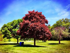 Beautiful Friday Afternoon (shahzad.alvi) Tags: green gta ramadan colours spring pictureoftheday beautiful apple toronto afternoon summer weekend takenfromiphone flickerfriday friday