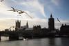 Seagulls (Hachimaki123) Tags: london londres uk seagull gaviota animal ave bird bigben