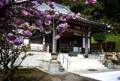 At A Temple In Kamakura (El-Branden Brazil) Tags: japan japanese buddhism buddhist temple asia asian kamakura religion sacred