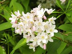 What is it? (Cornishcarolin. Stupid busy!! xx) Tags: cornwall httpswwwnationaltrustorguktrelissick trees nature flowers
