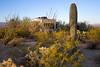 Cactus Filled Campsite (BP3811) Tags: 2018 arizona drycamping march rocky saguaronationalpark tucson tuscon bookdock cactus camper camping campsite rv