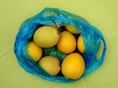 tunis_DSCN0383 (ghoermann) Tags: elaouina tunesien tå«nis tūnis tun lemon fruit