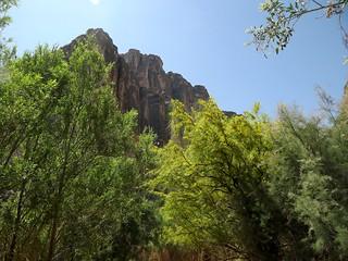 trailside - Santa Elena Canyon