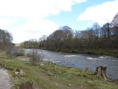 Kirkby Lonsdale - River Lune 180405 1 (maljoe) Tags: kirkbylonsdale cumbria rnblune