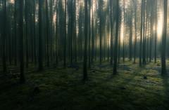 Morning (petrisalonen) Tags: nature landscape green finland metsä shadows light sun sunset sunrise shine