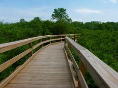 """Restored """"boondocks"""" trail at Lord Stirling Park (Dendroica cerulea) Tags: trail boardwalk marsh wetlands landscape spring lordstirlingpark baskingridge somersetcounty nj newjersey"""