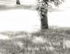 Summer Simmer (Podsville) Tags: heat summer fujinon55mmf22 legacylens sun