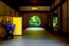 The Window of Enlightenment of Meigetsuin in Kamakura : 北鎌倉・明月院 方丈「悟りの窓」 (Dakiny) Tags: 2018 spring earlysummer may kanagawa kamakura kitakamakura outdoor freshgreen city street temple meigetsuin indoor landscape architecture building interior window
