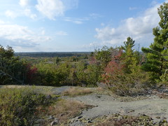 Canadian Shield Vista 1 (geodeos) Tags: sheffieldconservationarea canadianshield granite rock stone forest tree grass lichen moss scenery landscape nature