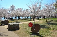 Beaver guidance (afagen) Tags: washington dc washingtondc districtofcolumbia tidalbasin cherryblossom sakura blossom sign