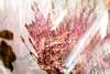 20180113_13-46-28_0026.jpg (d.kanne) Tags: blumen licht mehrfachbelichtung flächen abstrakt